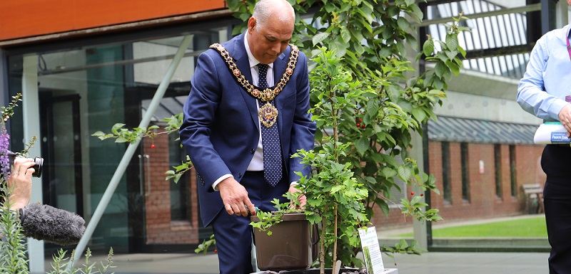 Lord Mayor of Manchester, Councillor Abid Latif Chohan, symbolically spinkles soil around Manchester Metropolitan University's Heiwa gingko at a dedication ceremony on July 1