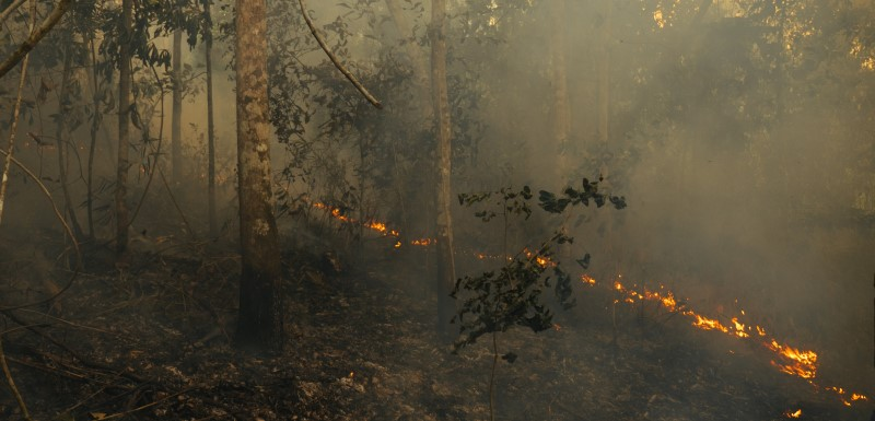 Amazon fires explained: their damage and can we stop them? by Alexander Lees, Senior Lecturer in Conservation Biology at Manchester Metropolitan University. Pic: Adam Ronan