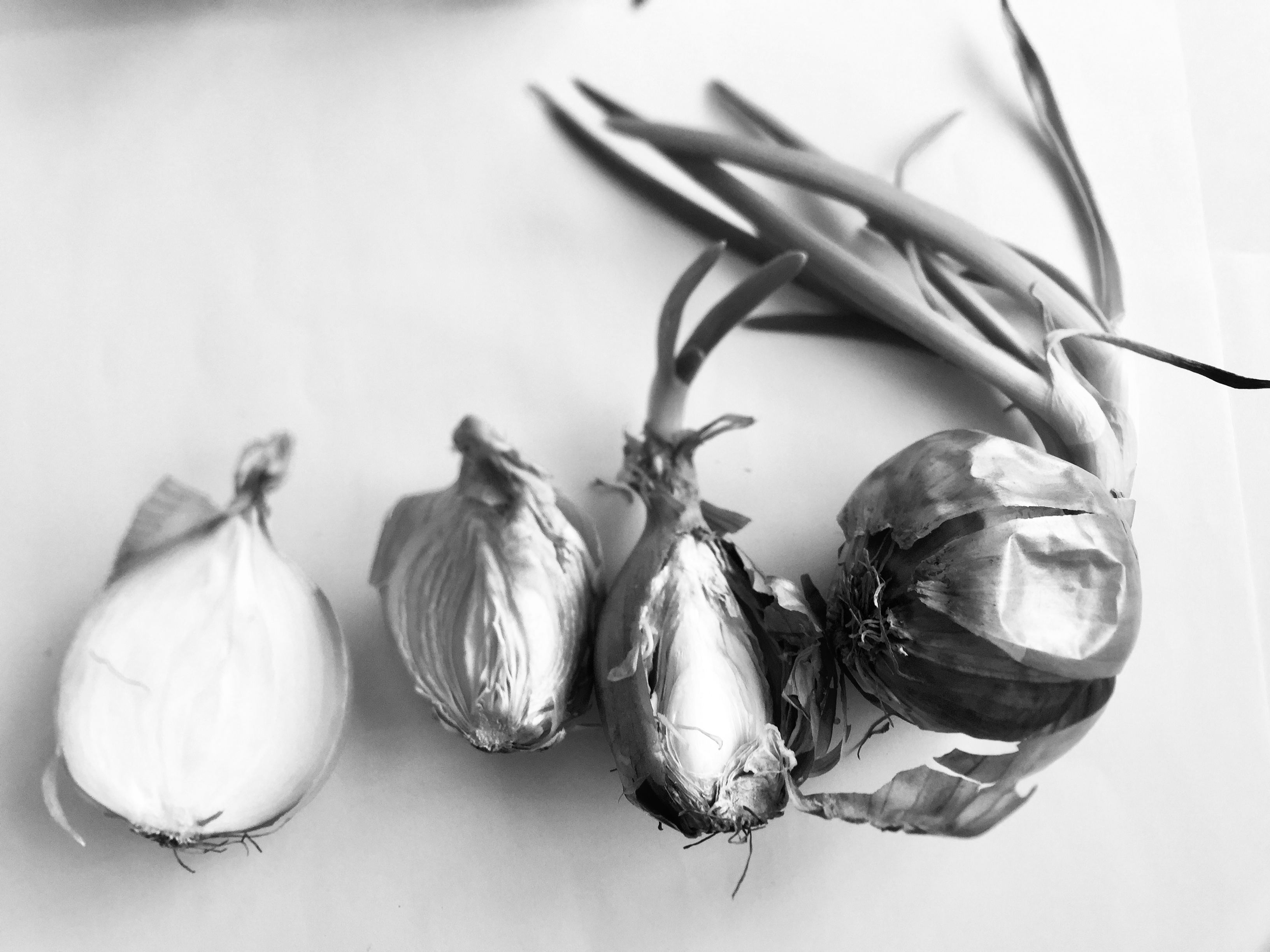 Onions. Photograph: Merrie Joy Williams