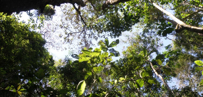 Dr Martin Sullivan was part of an international team of researchers to discover that Amazon forests with the greatest evolutionary diversity are the most productive