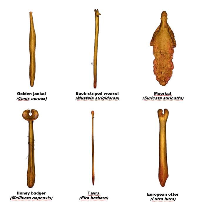 Macro bi otic vulva