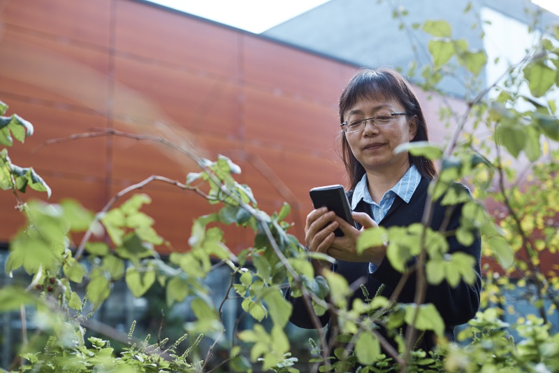 Professor Liangxiu Han demonstrates the Crop Disease Detector app