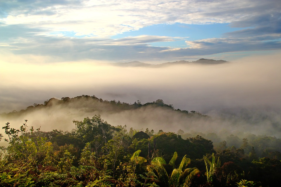 Tropical forests in Borneo provide a valuable service in fighting climate change
