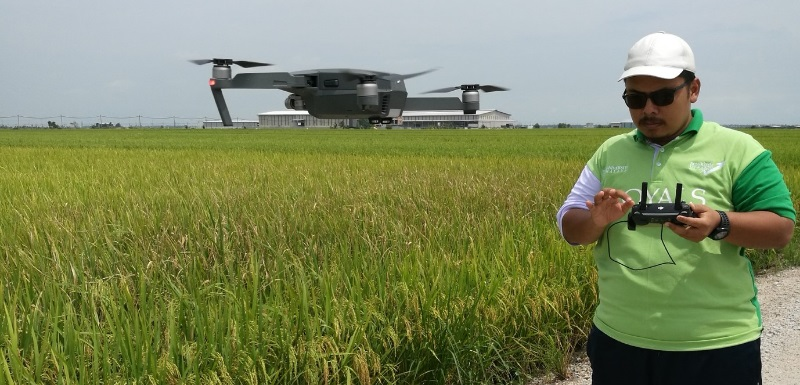 AI software using drone imagery will help arable farmers detect diseased rice crops