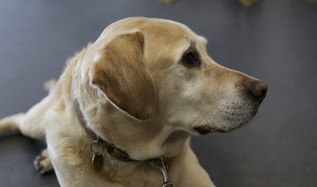 705e122f9 Paws for thought with Guide Dogs · Manchester Metropolitan University